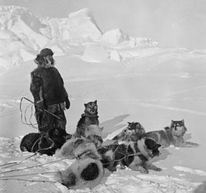 Helmer Hanssen seal hunting with a dog team, Hvalbukta (Bay of Whales), Antarctica, 1911–1912