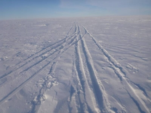 Ski tracks on the Ross Ice Shelf