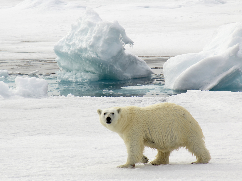 Isbjorn_Balto did you know that there are many similarities between the arctic and