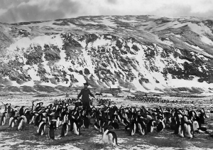 Per Savio has been to fetch water and is surrounded by Adelie penguins